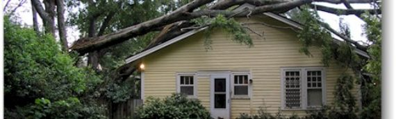 Defects in Trees  May Require Tree Removal