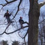 Tree cutting, tree trimming
