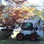 Transplanting trees in Falmouth