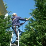 Pruning trees in Falmouth, MA