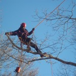trimming trees in Sandwich