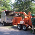 Removing trees in Barnstable MA, cutting trees