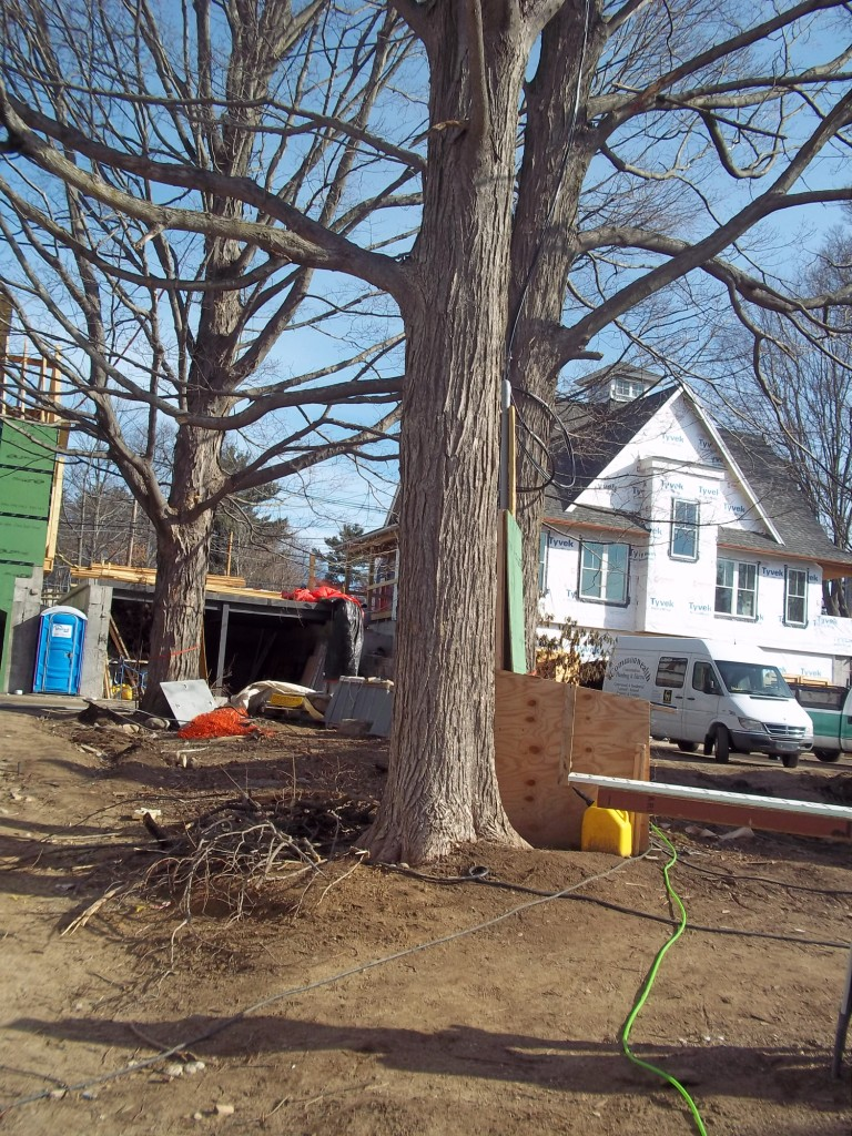 a typical job site before tree preservation measures.
