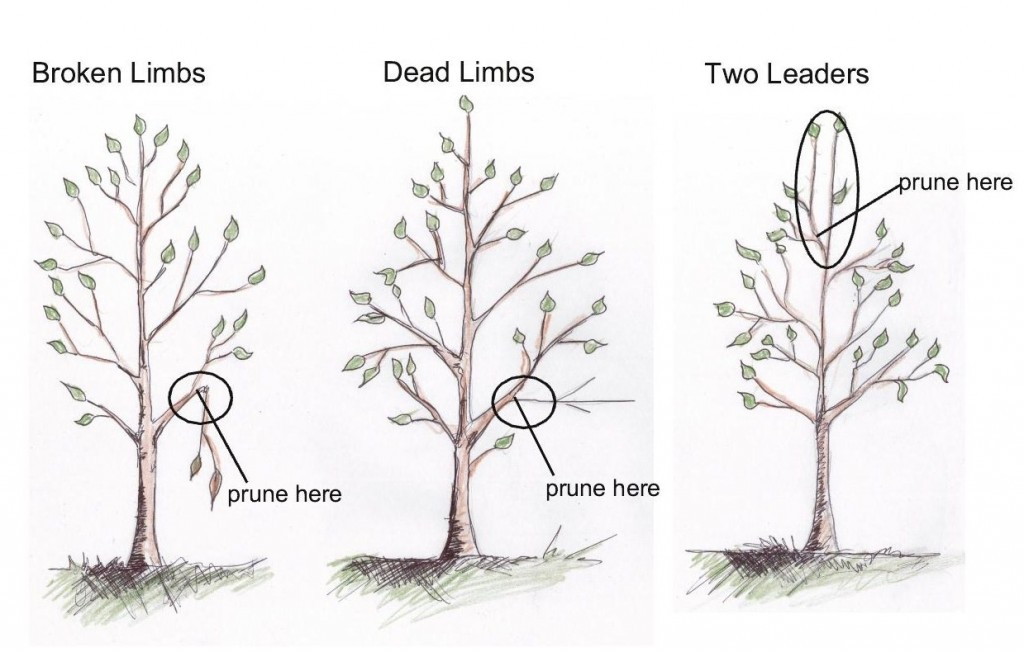 keep pruning of new trees to a minumum