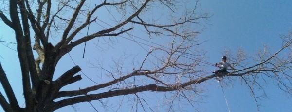 tree climbing, tree removal