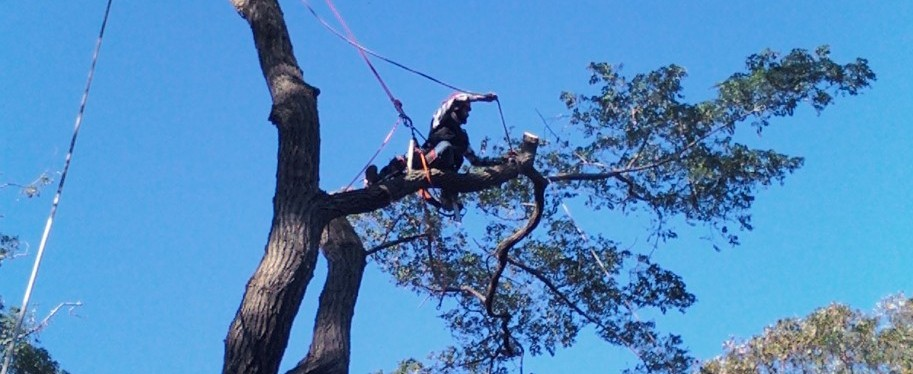 Professional tree service on Cape Cod