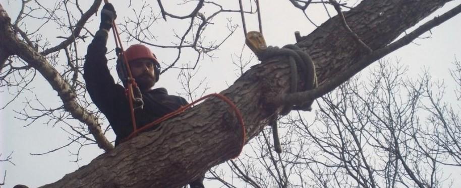 Cape Cod tree removal service