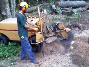 Stump grinding, removing a tree stump