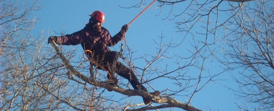 tree pruning on cape cod