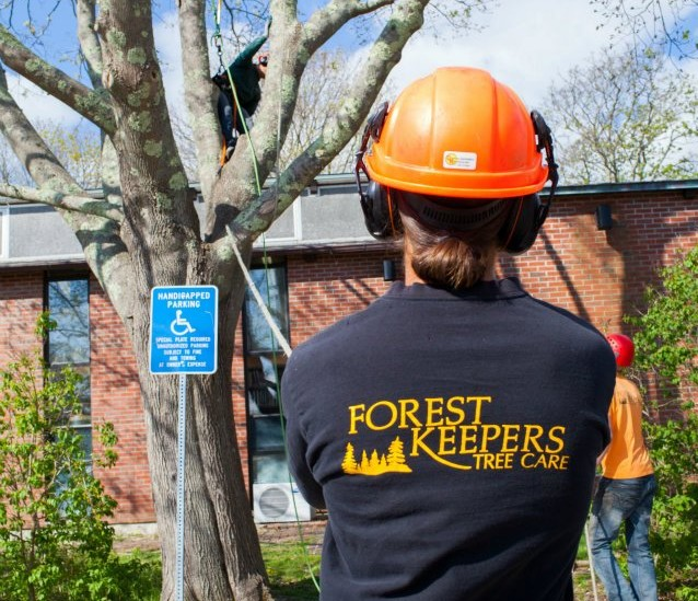 Arbor day Hyannis Cape Cod, tree pruning
