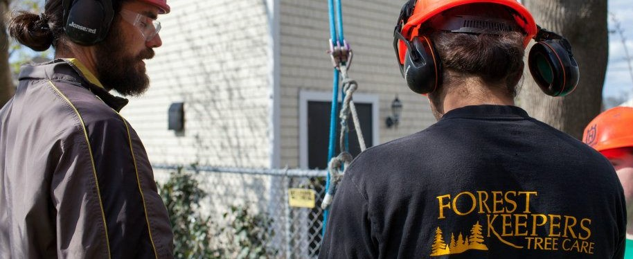 Proffessional tree service on Cape Cod