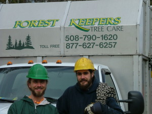 proffesional tree care