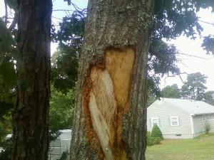 Repairing dmaged tree bark