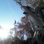 Falmouth tree service on Cape cod