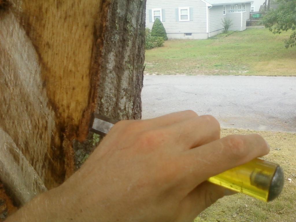 Bark tracing