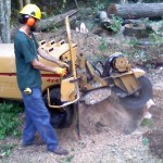 Stump removal service in Plmouth MA