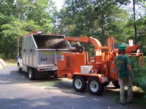 Dennis tree service