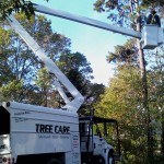 Brewster tree service